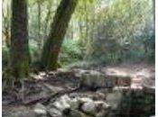 """Harpe celtique """"chemin brume"""":..."""