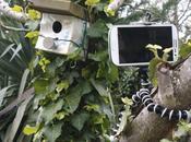 Test: Gorillapod, meilleur mini-trépied?