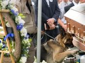 chien policier revoir maitre mort service Lauriane Gilliéron meurtrière...