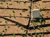 Banyuls, ceux l'aiment connaissent celliers terres templiers