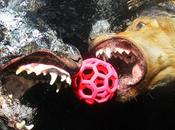 Prendre photos chiens sous l'eau, c'est rigolo