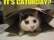 Aujourd'hui, c'est journée internationale chat