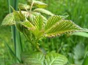 découverte plantes médicinales montagnes recettes