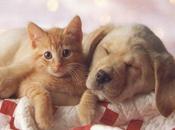 chat sauvé grâce sang d'un chien