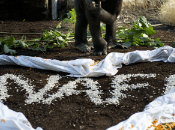 Baptême d'un bébé gorille Munich