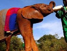 Parc national Tsavo paradis pour éléphants