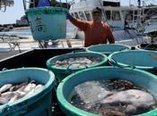 Fukushima 400.000 tonnes d'eau radioactive, volume cesse d'augmenter