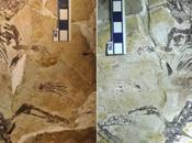 fossile millions d'années explique l'avènement mammifères