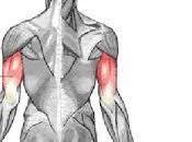 Exercices pour muscler triceps (sans haltère sans poids)
