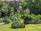 visite jardin d'Ecolo-bio-nature