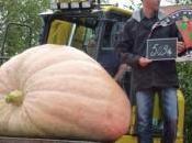 citrouille 56kg pour Halloween