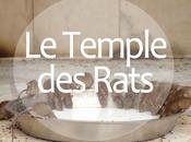 Bikaner Temple rats