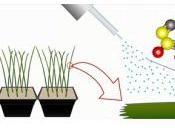 RISQUE CARDIAQUE: oignon l'effet antiagrégant plaquettaire Journal Agricultural Food Chemistry