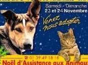 Journées d'adoption (animaux abandonnés)