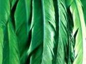 couronne verte Kasischke