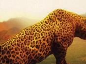 L'Oeil léopard, Henning Mankell