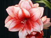 Choix fleurs saison