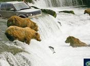 Land Rover pêche saumon