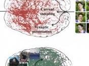 SOMMEIL, prix payer pour apprendre Neuron