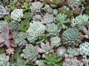 plantes reviennent mode succulentes
