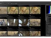 News vrai flux travail avec Nikon Capture NX-D