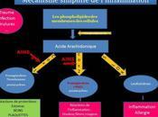 anti-inflammatoires stéroïdien AINS) médecine vétérinaire :leurs röles