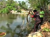Competition natation: Thaïlandais cobra royal mètres [HD]