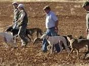 pétition contournable pour l'arrêt chasse Espagne avec lévriers