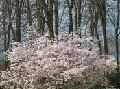 Rose blanc, jardins printemps jouent pastel