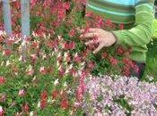 Retour Courson avec hibiscus bien curieux