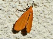 papillon nuit améliore bronzage soleil d'avril