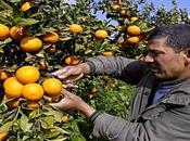 Augmenter production fruitière pour répondre besoins l'industrie agro-alimentaire