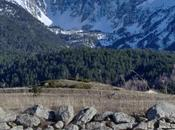 deux pins rocher