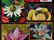 Jardin botanique Montréal: faut maintenant ralentir