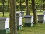 nouveau partenariat faveur biodiversitĂŠ urbaine