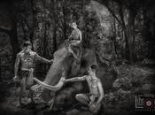 Surin, éléphants magnifiés [HD]