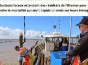 Pertuis breton réponse mortalité moules