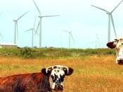 L'agriculture, grande oubliée transition énergétique