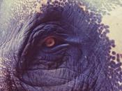 Elephant thé, petits bonheurs Kumily