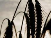 Vidéo. Guerre graines