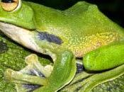 nouvelles espèces découvertes 2012-2013