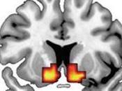 Addiction risque toxicomanie, même signature dans cerveau