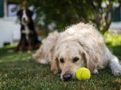 maison retraite pour chiens s'ouvre Japon