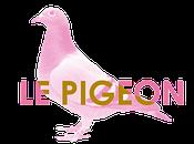 booké Pigeon Voyageur