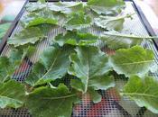 Déshydratation feuilles consoude chou Daubenton bonnes soupes miso perspectives