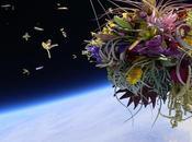 EXOBOTANICA, plantes envoyées dans l'espace