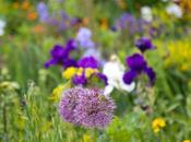 fleurs jardin Claude Monet