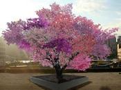 arbre produit fruits différents