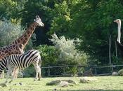 d'Amnéville Parc Sainte-Croix dans parcs animaliers France