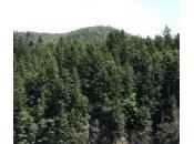 Vidéo. Forest l'homme planté hectares forêt tout seul